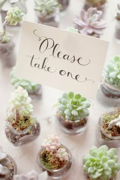 Une plante, idéal comme cadeau pour les invités lors d'un anniversaire sur le thème de la nature ou du jardin !