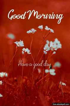 Good Morning Messages Friends, Good Morning Wishes Gif, Good Morning Monday Images, Good Morning Nature, Good Morning Friends Quotes, Good Morning Images Flowers, Good Morning Beautiful Images, Good Morning World, Good Morning Greetings