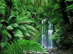 Tropical Forest or Bush in Australia...would be awesome to spend a day backpacking then stop here for a swim with my bebe.