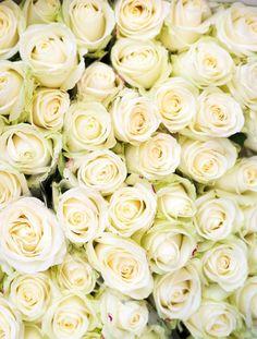 Green & white roses.