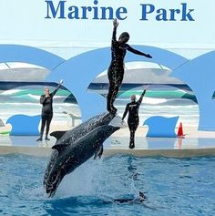 Gulf World Marine Park offers close encounters with many critters
