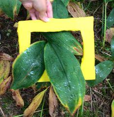 OpenIdeat: Metsä-teema, osa 1 Education, Learning, Nature, Teacher Stuff, Science, Naturaleza, Studying, Teaching, Onderwijs
