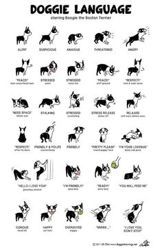 Good reference. Dog body language.