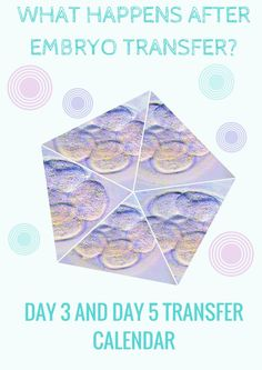 What happens after embryo transfer? Day 3 and Day 5 transfer calendar  EmbryosAlive.com
