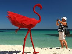 A flock of red flamingoes, Chinese artist Wendi Zhang's Mi No has flown off with the prize as most popular artwork on the closing weekend of Cottesloe Sculpture by the Sea. Cottesloe Beach, Sea Sculpture, Water Element, Largest Countries, Beach Photos, Western Australia, Beautiful Beaches, Flamingo, Stock Photos