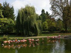 Bunte Vogelwelt | Zoo Heidelberg