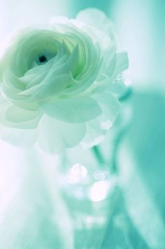 Turquoise petals.....TG