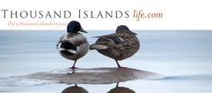 Tonight join Susie Smith, author, editor & life long Islander. 7pm @GanHeritage Thousand Islands, Editor, Ontario, Join, Author, Canada, Animals, Life, Animales
