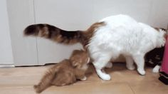 Cat Hat Funny Gif #45610 - Funny Cat Gifs|Funny Gifs|Cat Gifs