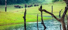 Famous for abundant wildlife, rich flora and fauna, Thekkady in Kerala is one of the famous wildlife sanctuaries where you get to witness various species of plants and animals. Kerala Tourism, Munnar, Tourist Places, Cool Places To Visit, Beautiful Places, National Parks, Wildlife, Tours, Travel