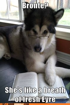 Puns are the highest form of humor. Those which we've chosen here will understand only people who think. Enjoy these puns and clever ideas. That's what they're here for. SEE ALSO: Check how geek you are with this compilation of science jokes Funny Dog Photos, Funny Animal Pictures, Funny Dogs, Cute Dogs, Funny Animals, Baby Animals, Random Pictures, Silly Dogs, Wild Animals