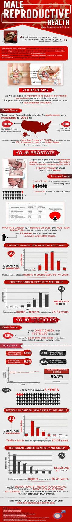 MALE REPRODUCTIVE HEALTH Infographic