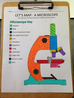 A School Called Home: A View Through the Microscope: nice way to learn the parts of a scope -by coloring the diagram