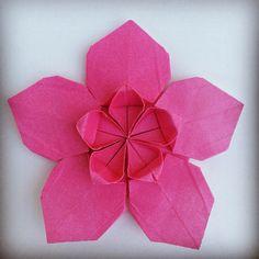 Origami Time! 08/53 Sakura Star by Ali Bahmani #おりがみ #二本 #日本 #종이접기 #花 #桜#papiroflexia #origami #paper #paperfolding #fold #foldedbyme #foldoftheday #flower #instaorigami #Winter #ElParaiso #sunday #February #21 #2016 #Caracas #Venezuela #chicoquick #