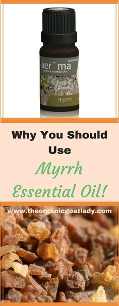 Why You Should Use Myrrh Essential Oil! - The Organic Goat Lady Myrrh Essential Oil, Essential Oil Perfume, Doterra Essential Oils, Essential Oil Blends, Herbal Remedies, Natural Remedies, Health Remedies, Natural Oils, Natural Health