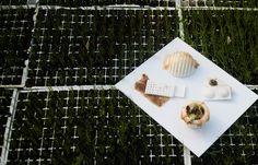 Roza Janusz creates sustainable food packaging that grows like a vegetable Plastic Food Packaging, Food Packaging Design, Edible Food, Sustainable Food, Sustainability, Vegetables, Create, Grid, Veggie Food