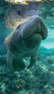 Revista El Cañero: Especies en peligro de extinción en Casa