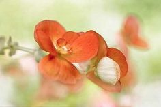 Summer Glow by Mandy Disher Photographic Print Canvas Art