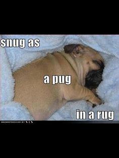 Cute Dog Pictures Pug-in-a-Rug – Joke Overflow - Joke Archive Animal Jokes, Funny Animals, Cute Animals, Animal Funnies, Wild Animals, Cute Dog Pictures, Funny Animal Pictures, Dog Photos, Pug Puppies