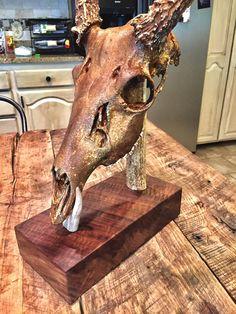 Unique European Mount   Etsy Deer Mount Decor, Antler Mount, Deer Decor, Wall Decor, Deer Skull Art, Deer Skulls, Animal Skulls, Euro Mounts, Deer Antler Crafts