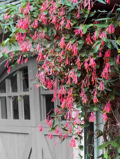 5 Fast-Climbing Vines for Your Garden