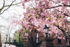 Spring blooms in Providence, Rhode Island Hannah Robinson, Never Have I Ever, Spring Blooms, Lifestyle Blog, Haha, Vacation, Love, Reading, Travel