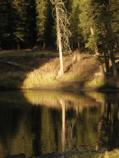 Reflections in Slough Creek