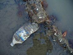 Bottle In Pond