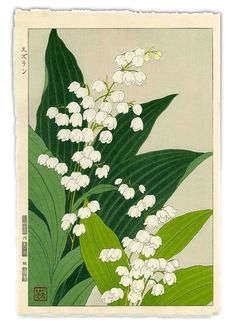 Lily of theValley by Teru Kuzuhara, Shodo Kawarazaki Spring Flower Japanese Woodblock Print Illustration Botanique, Illustration Blume, Graphic Design Illustration, Botanical Drawings, Botanical Prints, Art Floral, Art Asiatique, Guache, Japanese Flowers