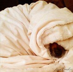 Snug as a bug in a rug {Chloe}!!