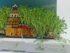 OrganiCard - A living postcard Cards, Maps, Playing Cards