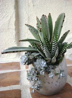 Design by Cindy Davison of The Succulent Perch ~ These succulents look so good together.