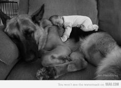 super cute! Our German Shepard used to let our kittens sleep on his back when it was cold outside.