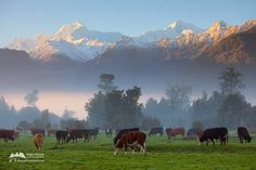 Southern Alps, South Island, New Zealand