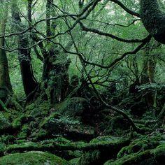 雨による侵食で形成された巨岩に、幽玄な原生林。深緑に苔むす静寂の森。[白谷雲水峡/鹿児島県熊毛郡] | ONESTORY Kagoshima, Japanese Landscape, Concept Art, Green, Plants, Conceptual Art, Flora, Plant