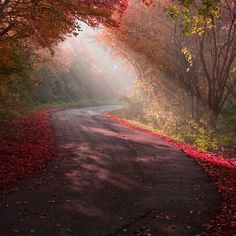 Autumnal Morning in Essex, England