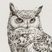 Thumbnail of a Horned Owl ink drawing