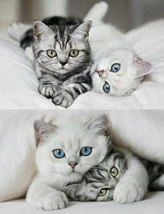So what,  we have different eye colours ?