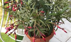 Ha lenne segge a mediterrán növényeknek, befagyna