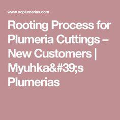 Rooting Process for Plumeria Cuttings – New Customers | Myuhka's Plumerias