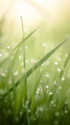 Water drop and grass. Pretty water drops/morning dews iPhone Wallpapers. Tap to see more Nature Wallpapers. | @mobile9