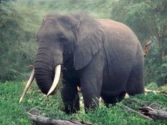 African Safari | Tanzania Safari | Africa Safaris