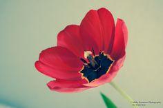Blütenglanz