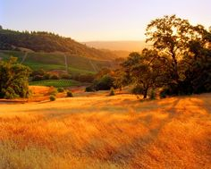 Sunset in Sonoma...
