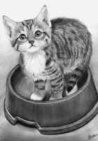 Adult Coloring Pages-Kleuren Voor Volwassenen Animal Drawings, Cute Drawings, Pencil Drawings, Pencil Sketching, Animal Sketches, Realistic Drawings, Simple Cat Drawing, Drawing Ideas, Adult Coloring Pages