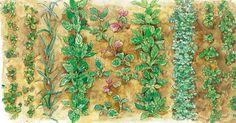 Auch wenn die Ernte inzwischen auf Hochtouren läuft und viele Gemüse jetzt bereits das Beet räumen: Noch ist genügend Zeit für die Aussaat und Pflanzung von Herbstgemüse, knackigem Salat, saftigen Rüben und würzigen Kräutern.