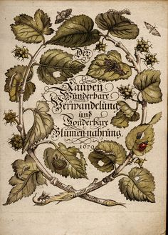 Maria Sibylla Merian. Title page from Der Raupen Wunderbare Verwandelung und Sonderbare Blumen-Nahrung. [The Miraculous Transformation and Unusual Flower-Food of Caterpillars], 1679-1683.