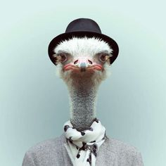 Personified Animal Depictions - These Zoo Portraits by Yago Partal Plays With Perception (GALLERY)