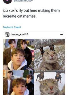 Funny Kpop Memes, Exo Memes, Stupid Memes, Funny Captions, Funny Humor, Lucas Lucas, Lucas Nct, Winwin, Nct Life