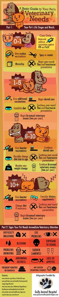 Pet Care Infographic. It would be so great to send something like this home with everyone. We could make our own infographic from scratch with Jess's picks for advice - warm weather do's & don'ts, dental, vaccines, etc.